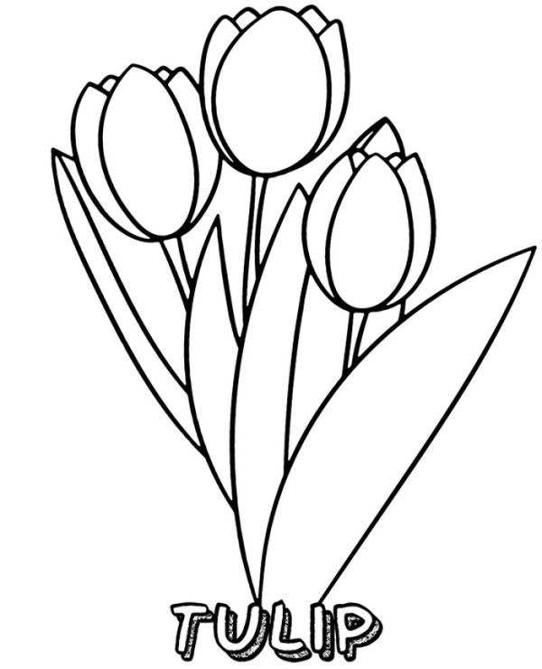 Beautiful Tulip Coloring Pages Collection Free Coloring Sheets Easy Coloring Pages Flower Coloring Sheets Spring Coloring Sheets