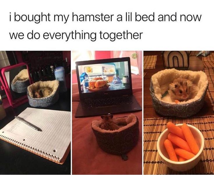 I bought my hamster a bed