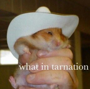 What in hamster