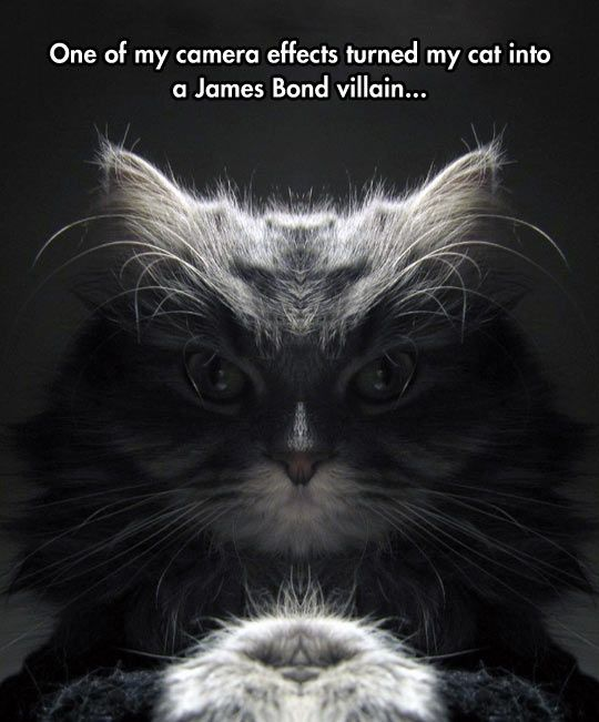 No, Mr Bond, I Expect You To Feed Me, Then Die  // funny pictures - funny photos - funny images - funny pics - funny quotes - #lol #humor #funnypictures