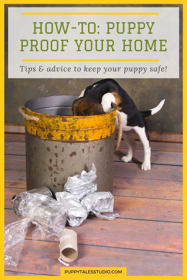 Howto puppy proof your home tips and advice to keep