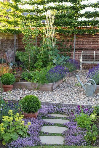 Potager with raised beds of vegetables and lavender, bench…