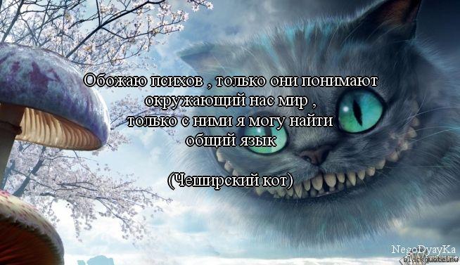 Чеширский кот не врёт!