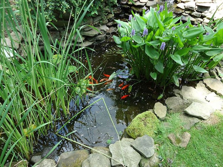 Landscaping Design with Outdoor Ponds and Water Features