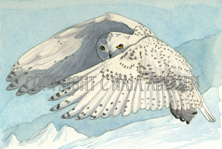 Snowy Owl. Made as an illustration for WWF: 30 greenlandic animals on stamps The whole forming a landscape with the most common greenlandic habitats represented. Available as A3-photoprint 400 DKK / 54 Euro. Watercolour by Naja Abelsen. 13 x 9,5 cm 2006