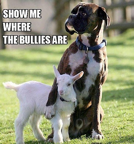 Show me the bullies...