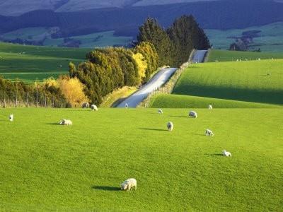 Central Otago ,Newzealand.