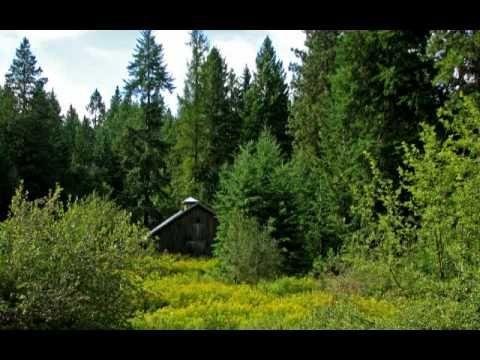 Az erdő éneke. / Anzan -  Peaceful Passage - Relaxation /