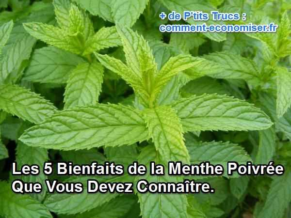 Les 5 Bienfaits de la Menthe Poivrée Que Vous Devez Connaître.