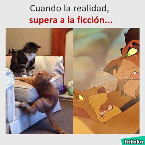 Soluciones Para Todo #soluciones #tip #tips #salud #mascotas #trucos #hogar #ecología #buenhumor #humor #chistes #risa #memes