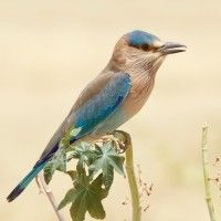 Free Bird Photography Contest - Nature Photography Simplified