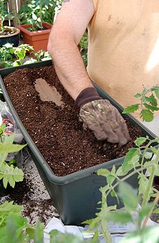 Fertilize Your Plants    Here's a great way to reuse all the old tea bags you have around the house: use them for your plants. Tea bags can be used as an organic fertilizer for potted house plants, with many stimulant benefits from the nutrients in the ingredients. You can even remove the bags and mix the tea leaves inside with your soil, helping absorb water, retaining moisture.