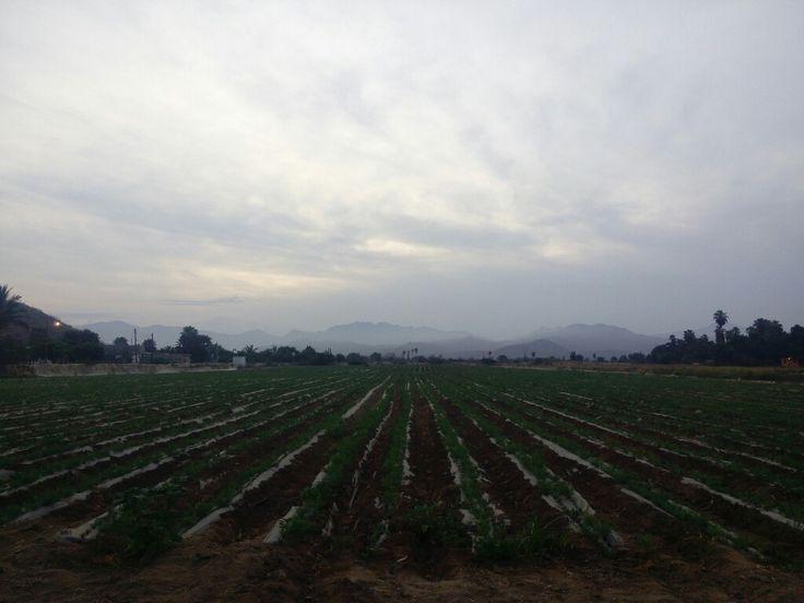 #Pescadero #Bcs #Mex