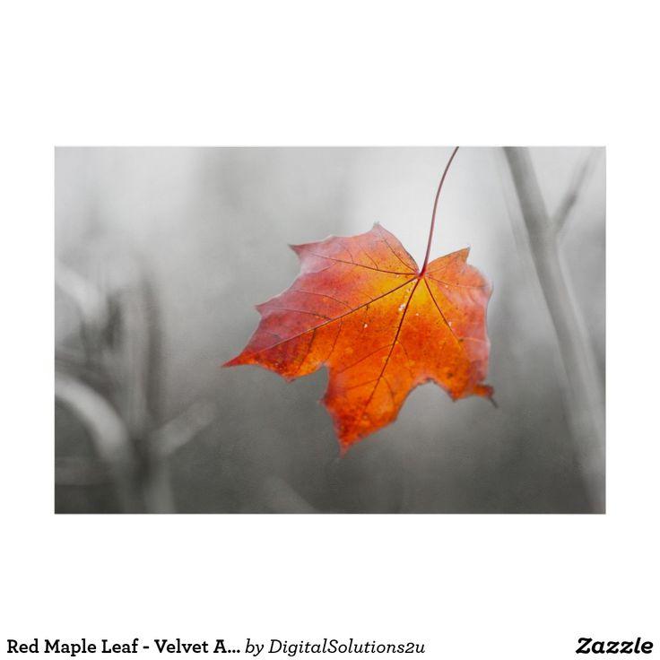 Red Maple Leaf - Velvet Autumn Poster