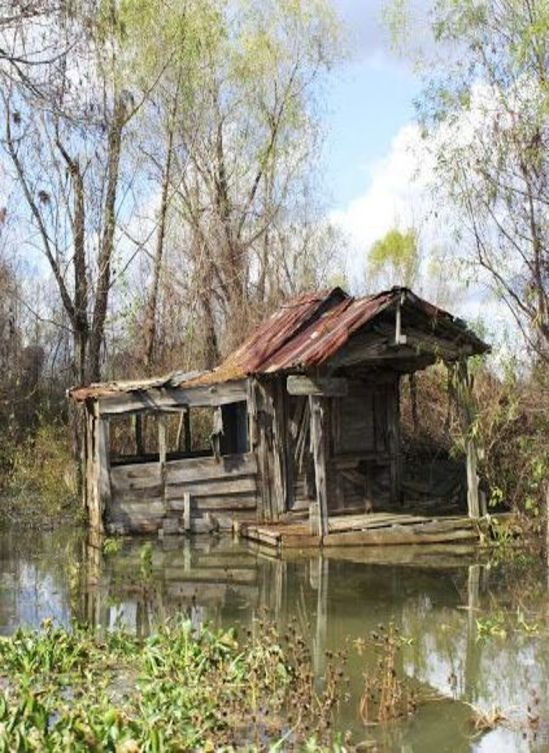 Swamp Cabin! It's not the structure that attracts my attention... but the isolation. I know most women might go a little batty, but I could do with a little loneliness! Or stranded with a swap hunk... I could do stranded!