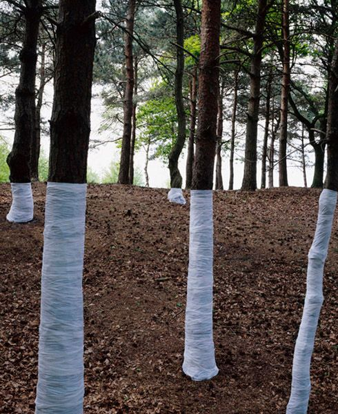 'This is an ongoing series of constructed photographs rooted in the forest. These works, carried out in Surrey, Hampshire and Wales,involve site specific interventions in the landscape, 'wrapping' trees with white material to construct a visual relationship between tree, not-tree and the line of horizon according to the camera's viewpoint.' © Zander Olsen