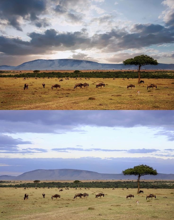 LandscapePro – edycja krajobrazu w kilku krokach