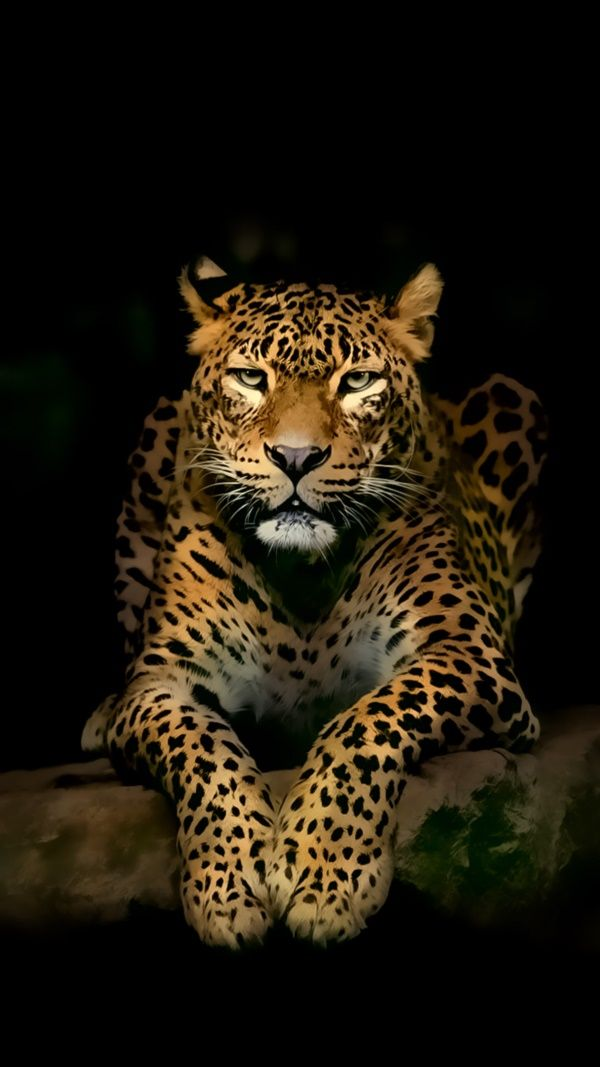 40 3d Iphone Lock Screen Wallpapers For 2017 Wild Animal Wallpaper Jaguar Animal Leopard Wallpaper