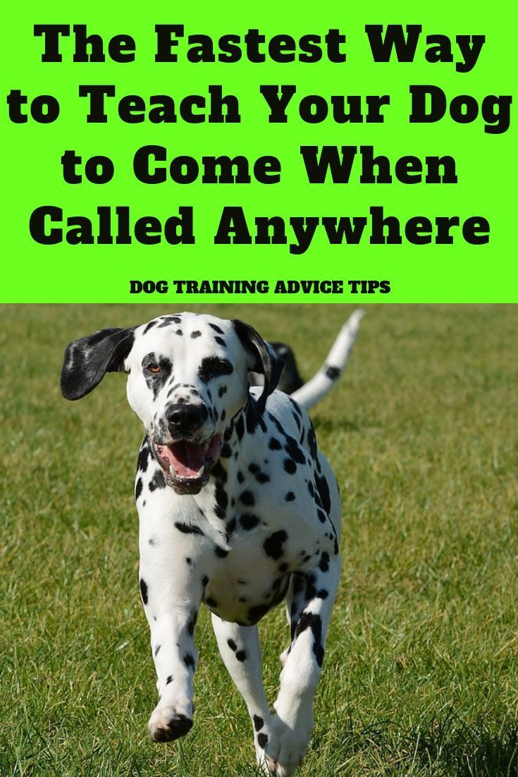 The Fastest Way To Teach Your Dog To Come When Called Anywhere