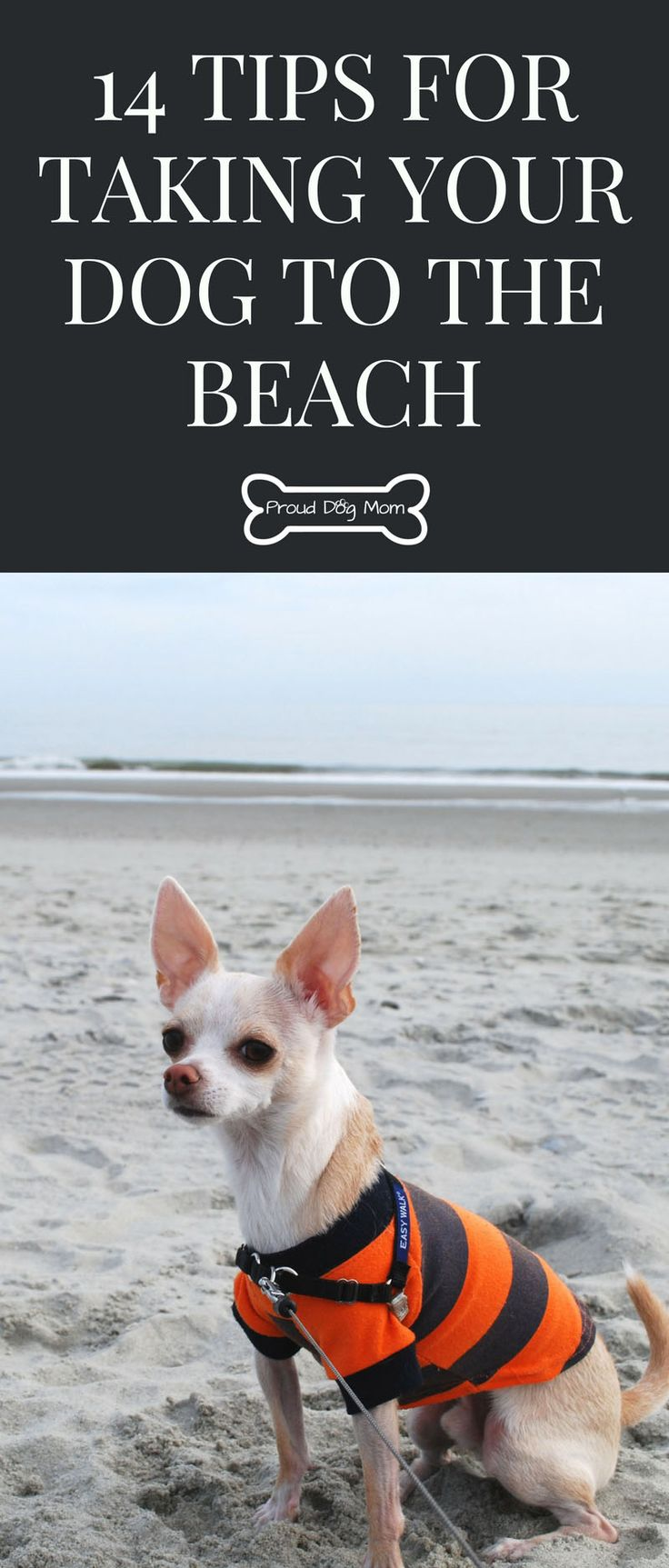 14 Tips For Taking Your Dog To The Beach | Dog Care Tips |