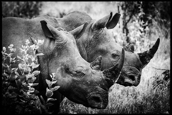 Horn of Africa II - Laurent Baheux - http://www.yellowkorner.com/photos/1470/horn-of-africa-ii.aspx