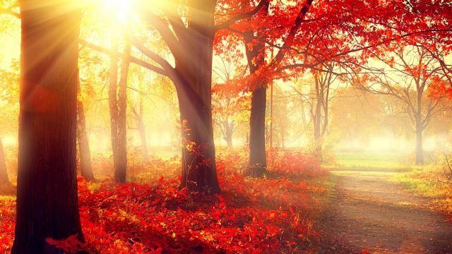 De extreem vroege herfst van dit jaar is een geval apart | NU - Het laatste nieuws het eerst op NU.nl
