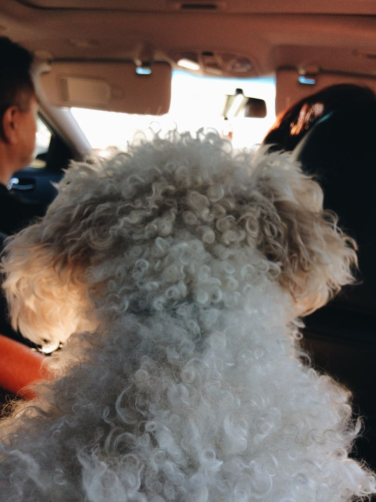 """Third Place: """"Milo""""  Description: Life in my car would not be worth living without my dog Submitted by Nancy Choi #MiltonON"""
