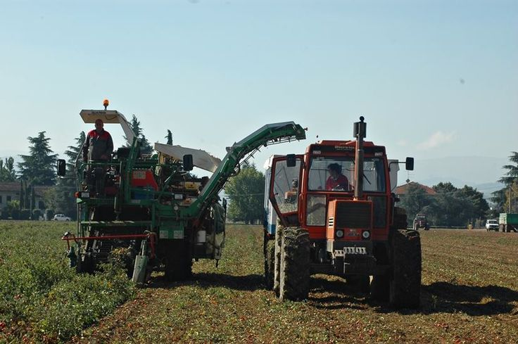 Our farmers hard at work during harvest. They love what they do and we love them for it. www.muttiparma.com.au