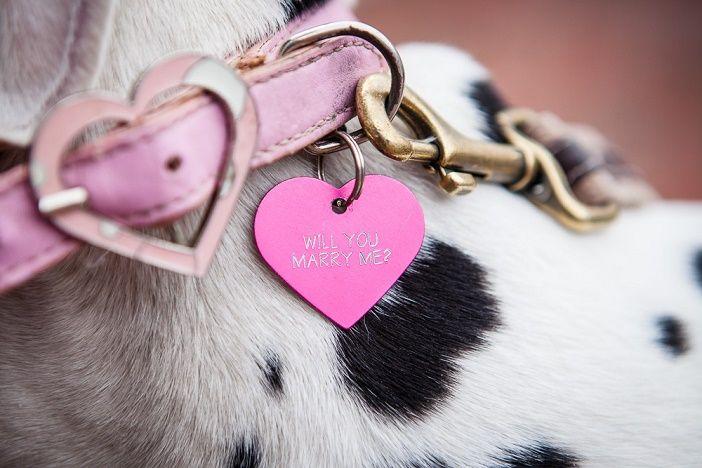 Puppy Dog Proposal
