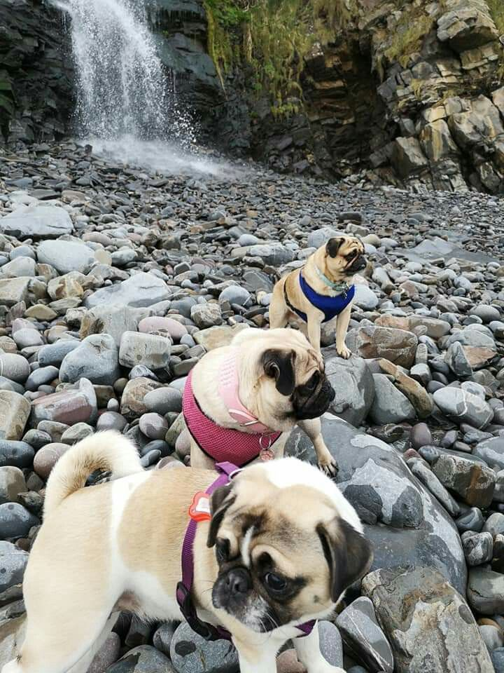 On Vacation Pugs Dogs Cute Baby Animals Pet Dogs