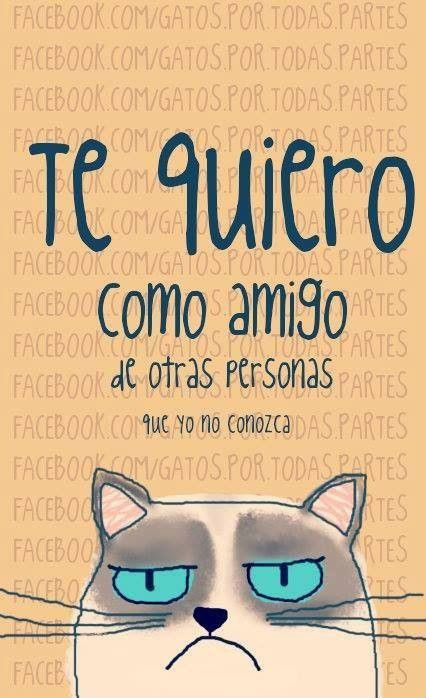 Las frases de Mr. Cat