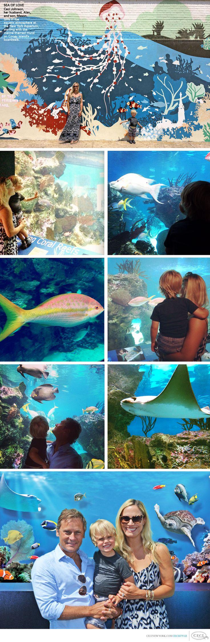 Best 25 aquarium mural ideas on pinterest plongeur for Aquarium mural wallpaper