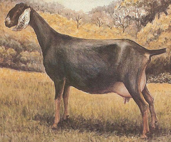 Let's talk herd names | Dairy Goat Info - Your Online ...