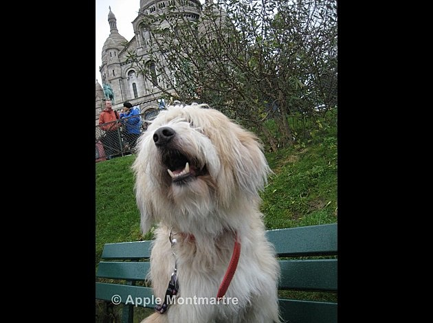 Apple is one of Scoop's friends! He lives in Montmartre and loves it! You can discover his adventures on his blog (he's a very good writer): http://www.monmontmartre.com/