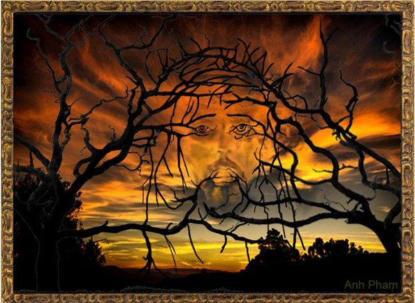 Jeez Illusion    Marvellous scenery with leafless branches and sky backdrop presenting an illusion of Christ's face.