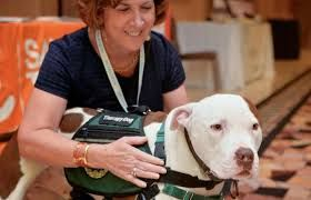 Emotional support animal certification is basically issued to who suffer from mental and emotional distress. They consider their pets as the emotional support system. Therefore, staying with pets is considered best for such emotionally distressed people. The certified doctors will review the conditions and prescribe with an ESA letter.  http://thedogtoronline.net/getting-an-esa-certification/