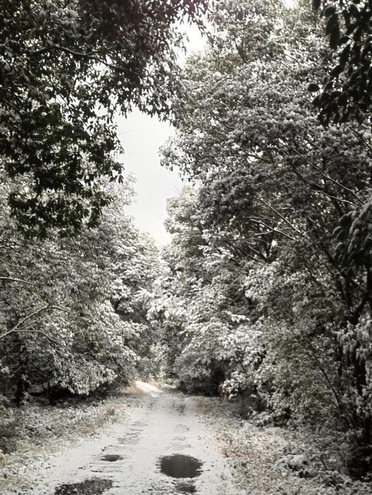 숲길...