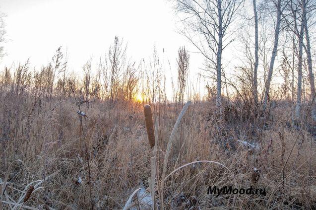 Утреннее осеннее настроение на восходе, изморозь и скоро зима и чудесное душевное настроение