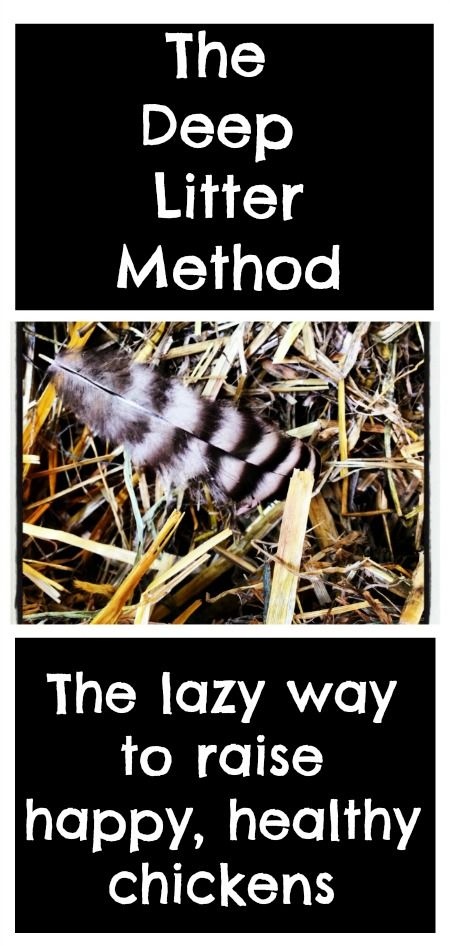 Inside the Chicken Coop: The Deep Litter Method. The lazy way to raise happy, healthy chickens. | Backyard Chicken Project