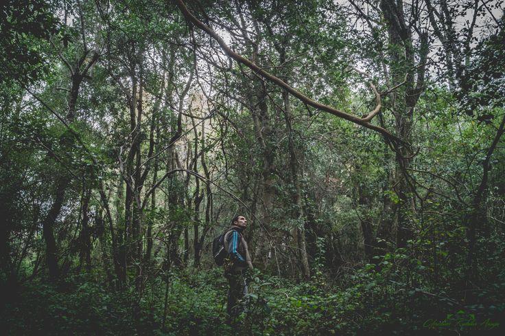 Bosque detrás del Llano Quilleco Chile by Chris Rubilar on 500px