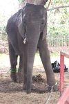 El elefante encadenado!