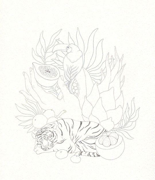 Tropical Dreams, process. Olga Svart Illustration