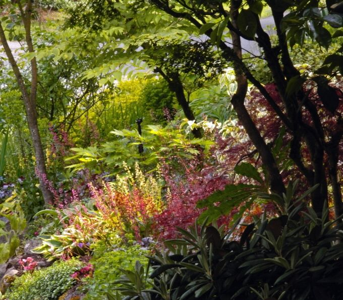 Dry shade Gardening under trees poses challenges