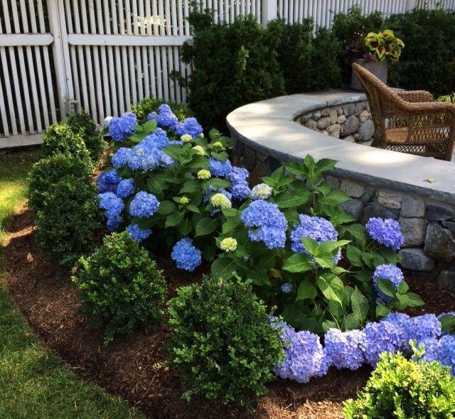Best 25 Hydrangea landscaping ideas on Pinterest