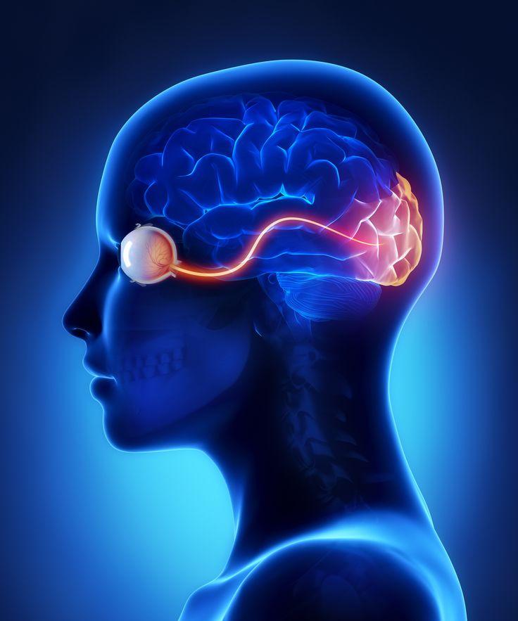 Resultado de imagen de imagenes del cerebro