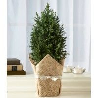 Birthday Plant Gifts,flowering plants in india,shop plants online india,Feng Shui Plants For Office,cakes and chocolates online,Gift Baskets for Men