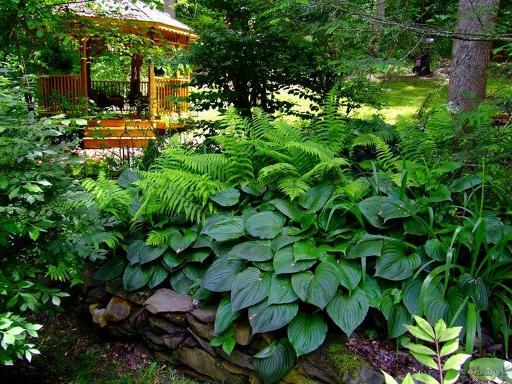 Landscaping With Ferns : Gazebo in the secret garden gardens hosta and