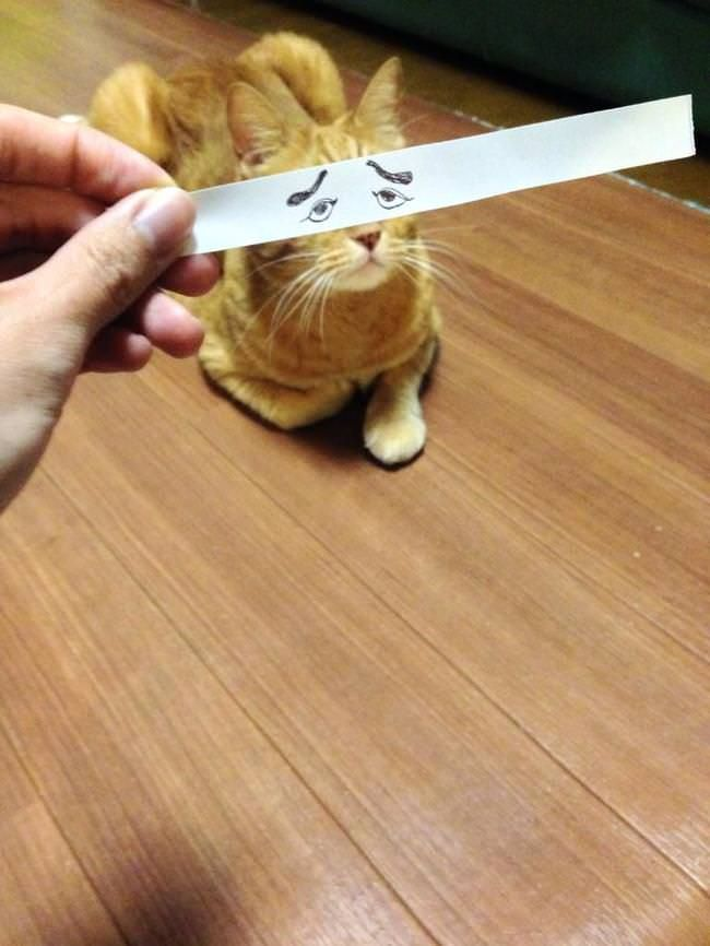 chat yeux dessin anime 2