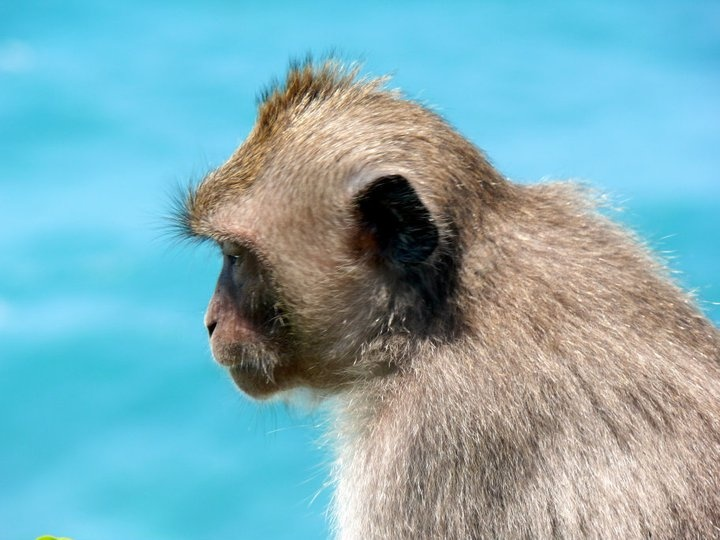 Monkey, Indian Ocean.  What else can you want in a picture?