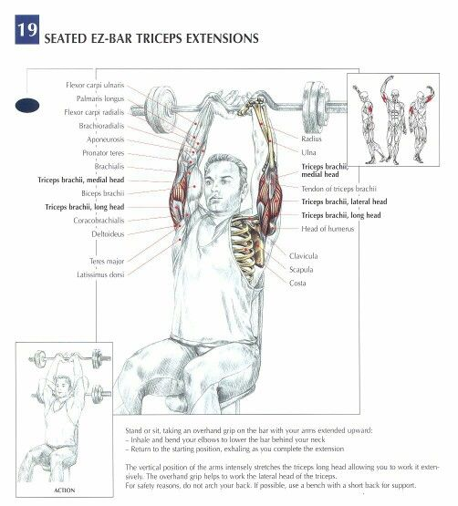 1000  Images About Triceps Workouts On Pinterest